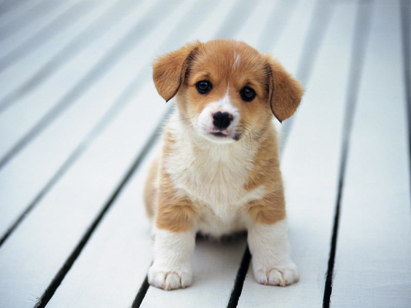 Anything N Everithing Cute Puppies