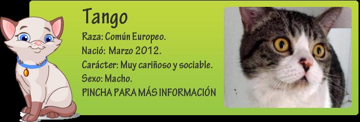 http://mirada-animal-toledo.blogspot.com.es/2014/03/tango-belleza-y-bondaz.html