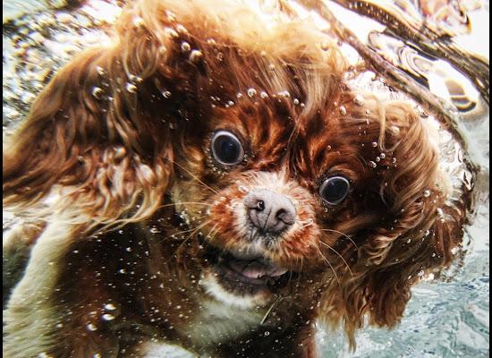 fotografías de perros nadando bajo el agua