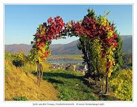 Herbst-Weinlaub