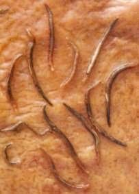 Comme sortent les parasites sur le jeûne sec