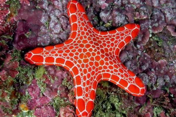 Life of Starfish Life of Sea