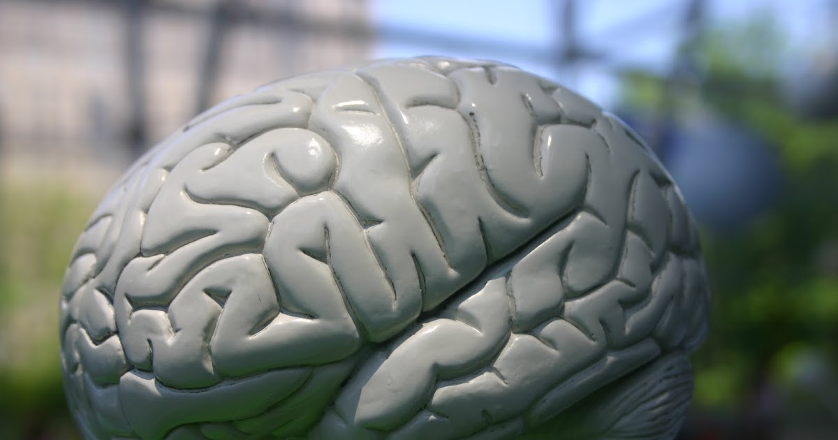 The Neurobiology of Conscious Intent
