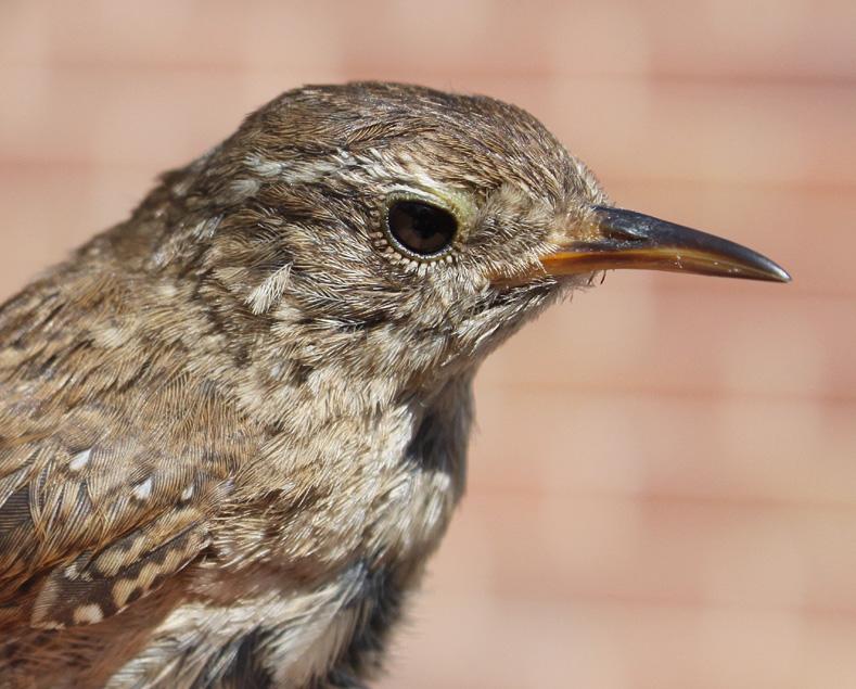 Bird Ringing Supplies