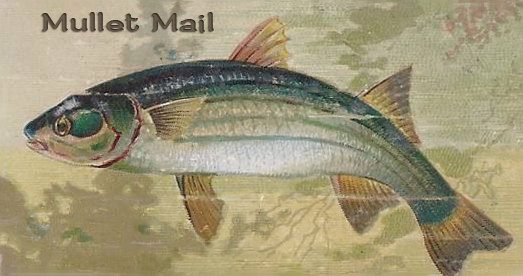 Mullet Mail