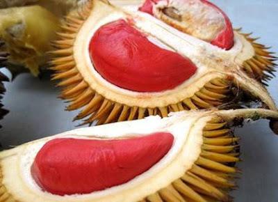 Durian Isi Merah