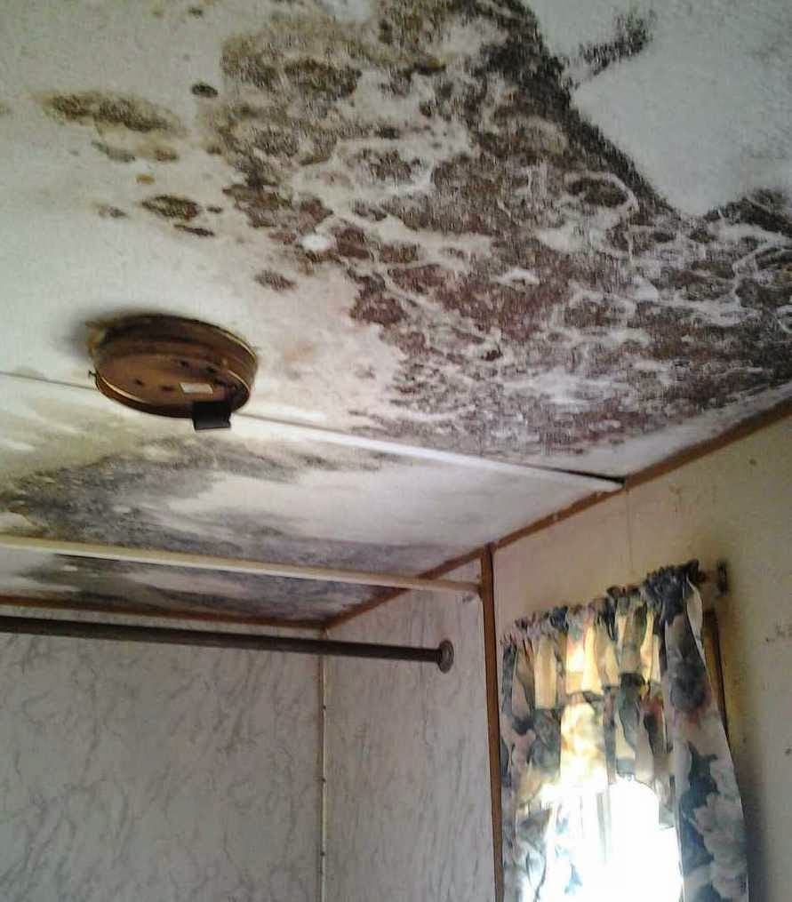 as an added bonus to the damaged roof you now not only have no running water due to burst pipes but also black mold and a rotten floor