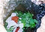 Sampah Organik - Artikel Kesehatan