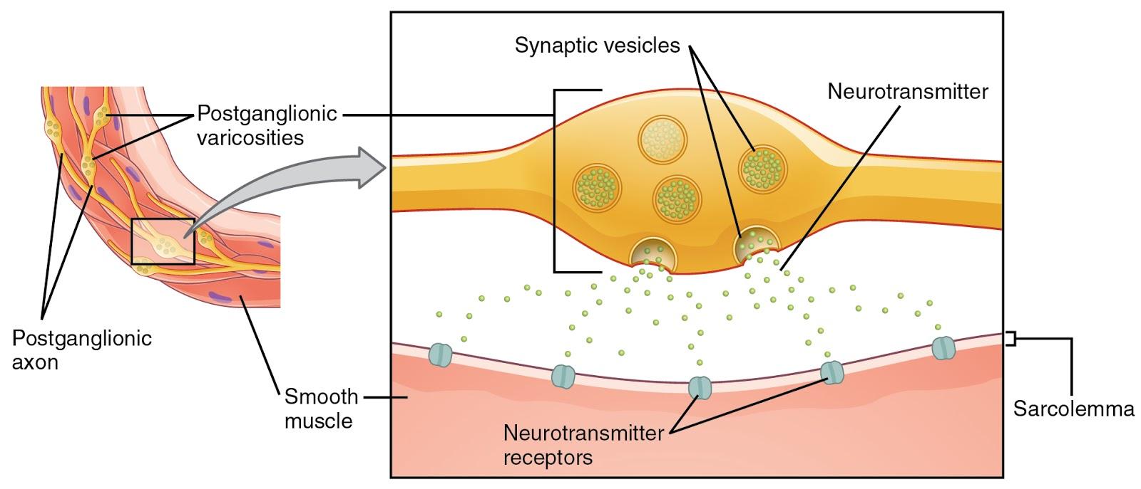 La trombosi di gemorroidalny che trattare