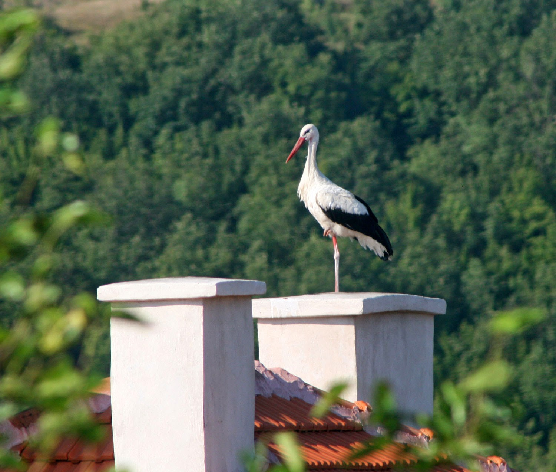 A stork made an appearance