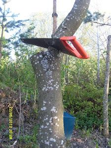 Kaadata ajoissa haaraiset puut pois pihapiiristä. Haaraiset puut ovat turvariski piha-alueilla