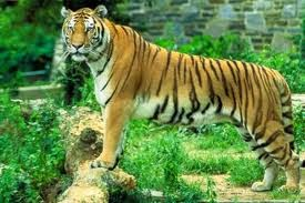 Tiger Reserve Sunderbans India