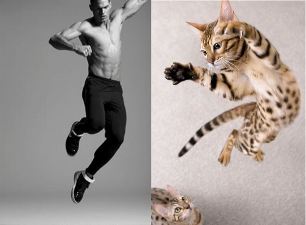 Models paired with cats