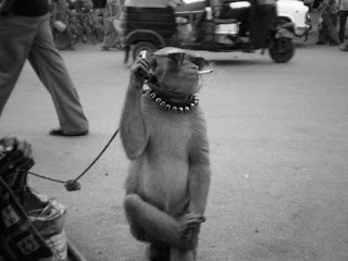 Stylish Monkey