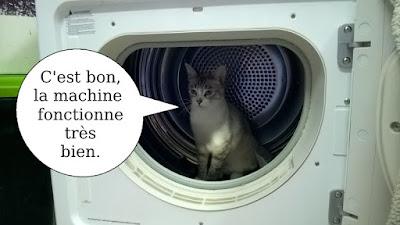Attention à ne pas mettre un chat dans le sèche-linge.