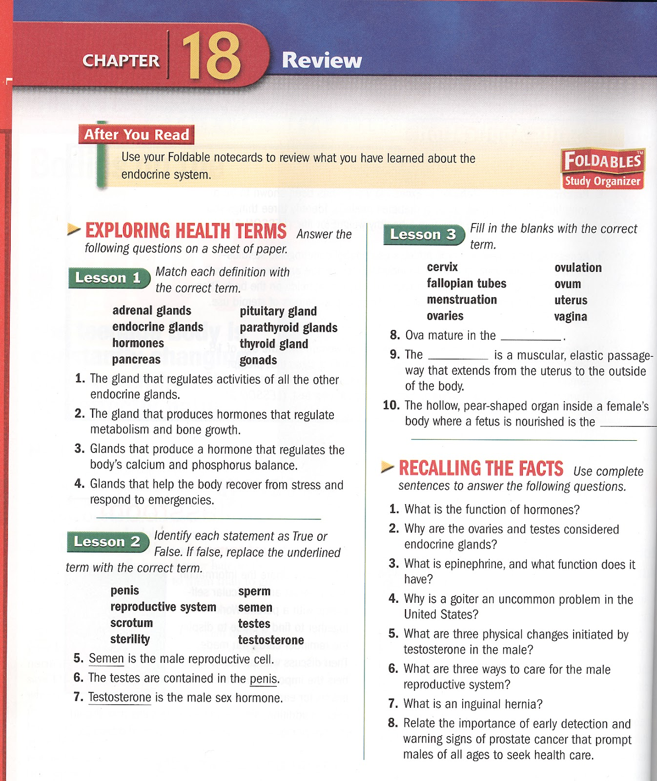 Chapter 16 Endocrine System Worksheet Answers - Kidz Activities