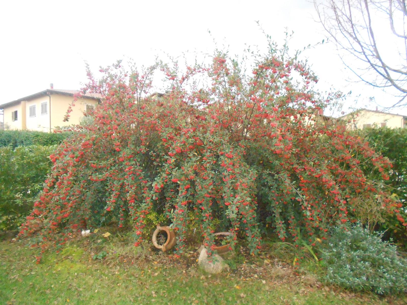 Piante Per Scarpate : Il vivaio nel mio giardino