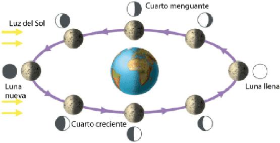 Apuntes de astronom a prof mauricio acevedo luna for Proxima luna creciente