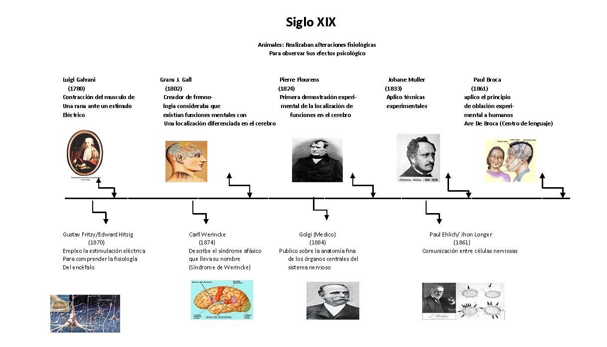 Lujoso Historia De La Anatomía Y La Fisiología Línea De Tiempo ...
