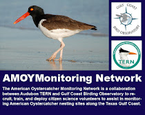 AMOY Network