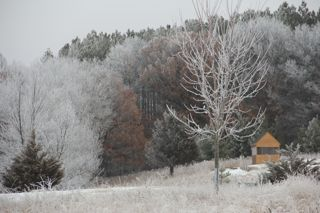 photo of trees covered with Minnesota hoar frost