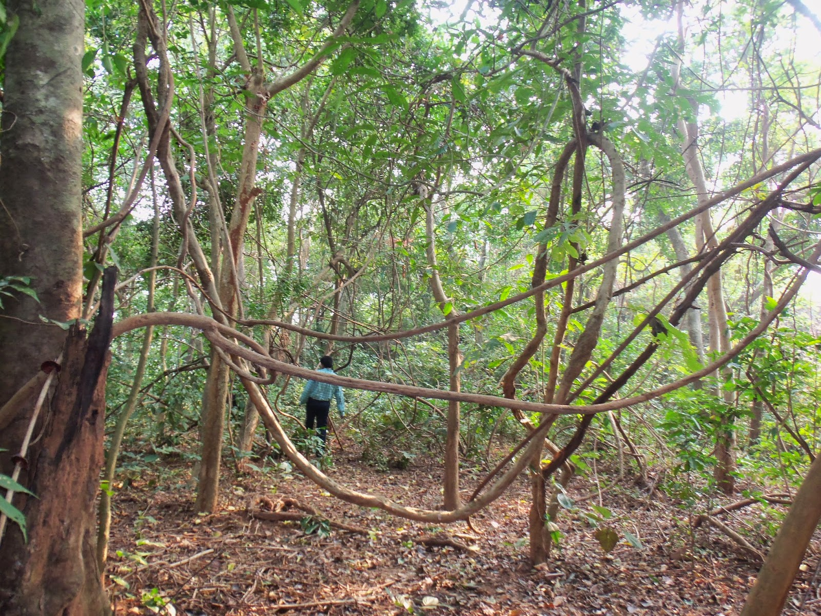 The jungle way prevails with the serpentine plants