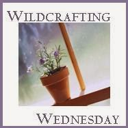 http://mindbodyandsoleonline.com/herbal-information/130th-wildcrafting-wednesday/
