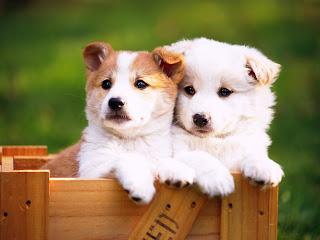 Fotos tiernas de perritos