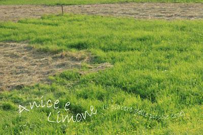 70% prato verde-30% erba secca