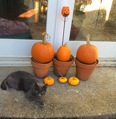 Senior cat is lurking by the Halloween decorations