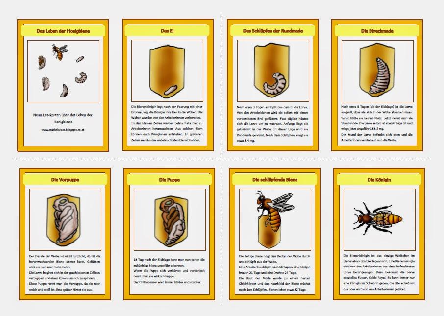 krabbelwiese im ruhemodus honigbiene. Black Bedroom Furniture Sets. Home Design Ideas