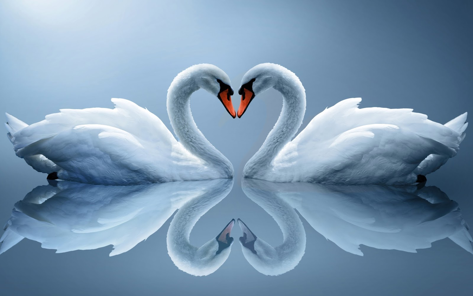 Beautiful Animal Couple Image Of Love Hd Desktop Wallpaper