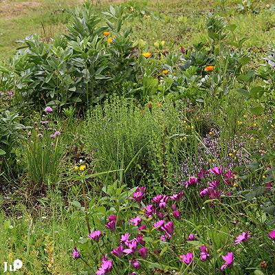 Ju carnets en juillet au jardin for Jardin 5 juillet biskra