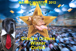 Cracker Dog Winner