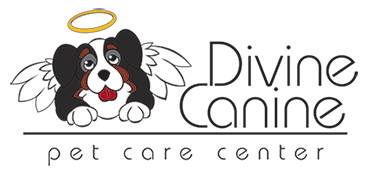 The Divine Canine Dog Blog
