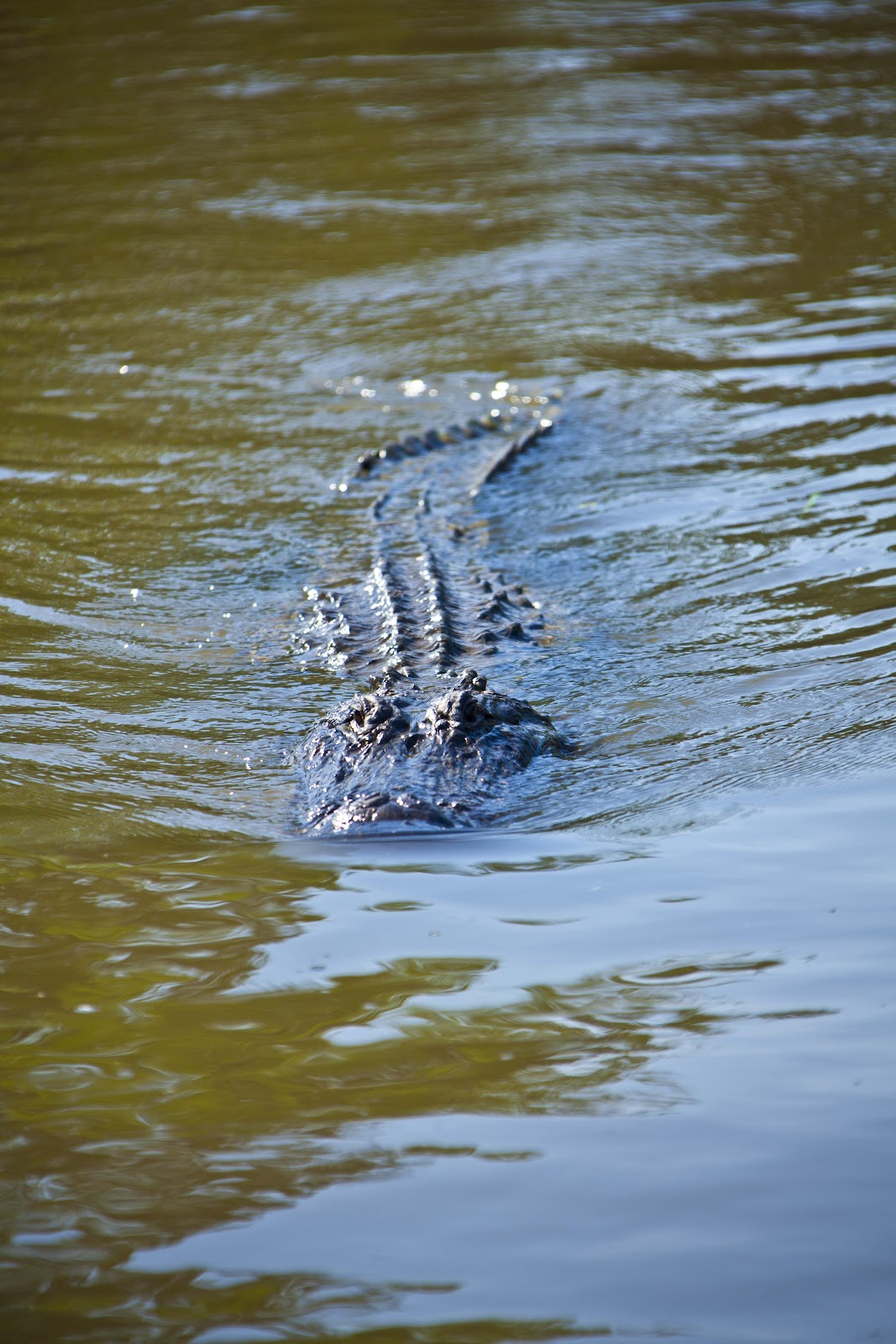 Airboat Tours New Orleans >> Marty Kittrell: Louisiana Airboat Swamp Tour
