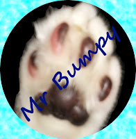 Image: Mr Bumpy's paw with his name written across it.