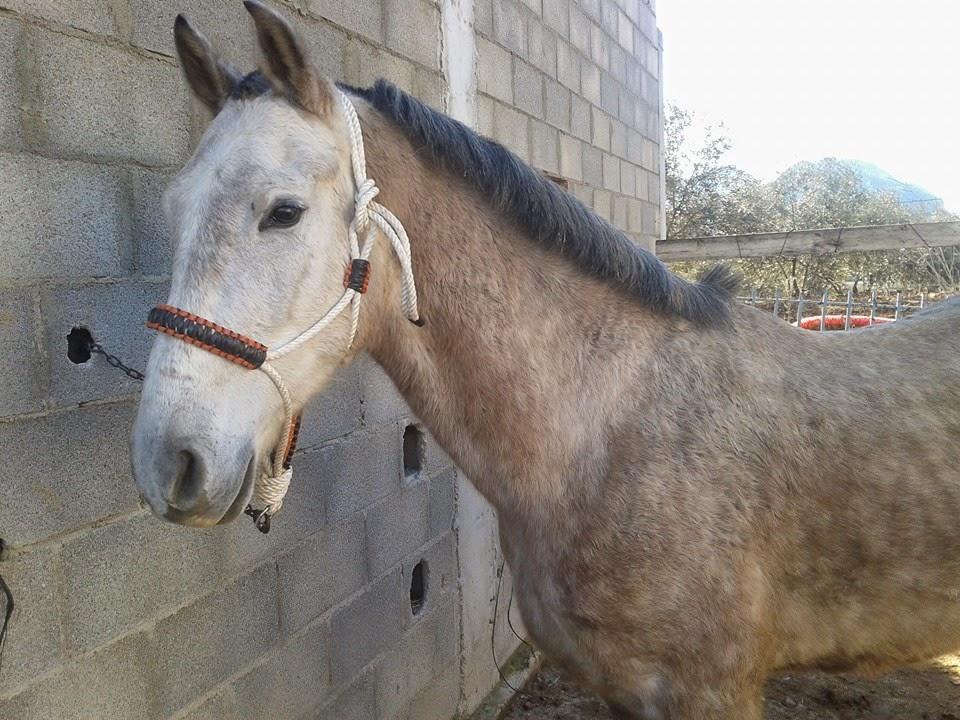 Cabezadas de cuadra para caballos for Cabezadas para caballos