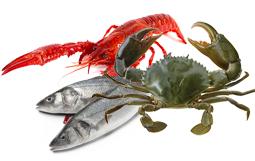 seafood yang mengandung vitamin e