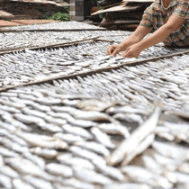 dried-fish-with-worms-back-to-market