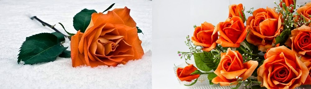 The meaning of roses steve 39 s decor for The meaning of orange roses