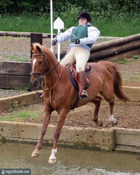 image drole equitation