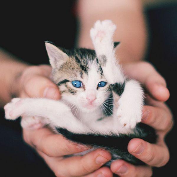 Worlds Smallest Animals Photos  - Samallest Animals
