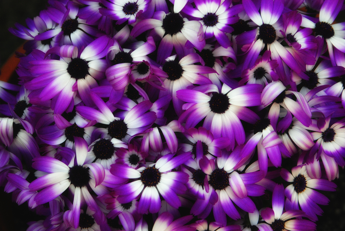 Pressed Flower Delights Purple Flowers Pictures
