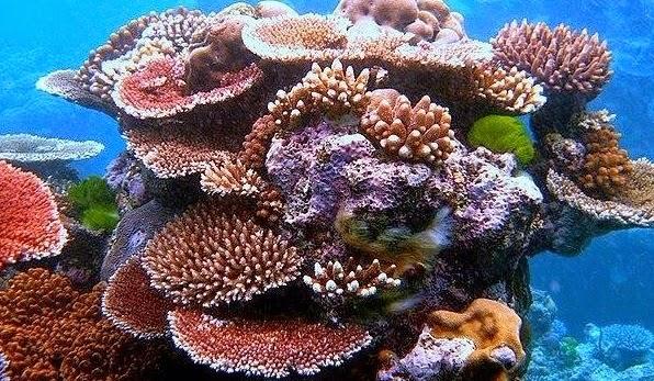 Keindahan Bawah Laut Bintan