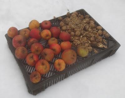 Vogelfutter - Äpfel und Walnüsse im Schnee