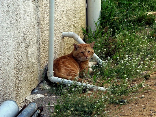 Cat from Gruissan France