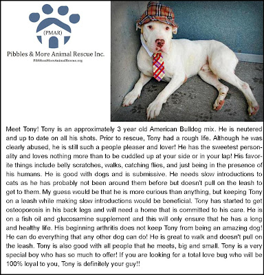 Freckles the Dog and Pibbles & More Animal Rescue
