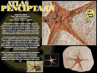 Fosil Tapak Sulaiman Umur 490 ke 443 juta tahun Zaman Ordovician Lokasi Formasi Kataoua Maghribi