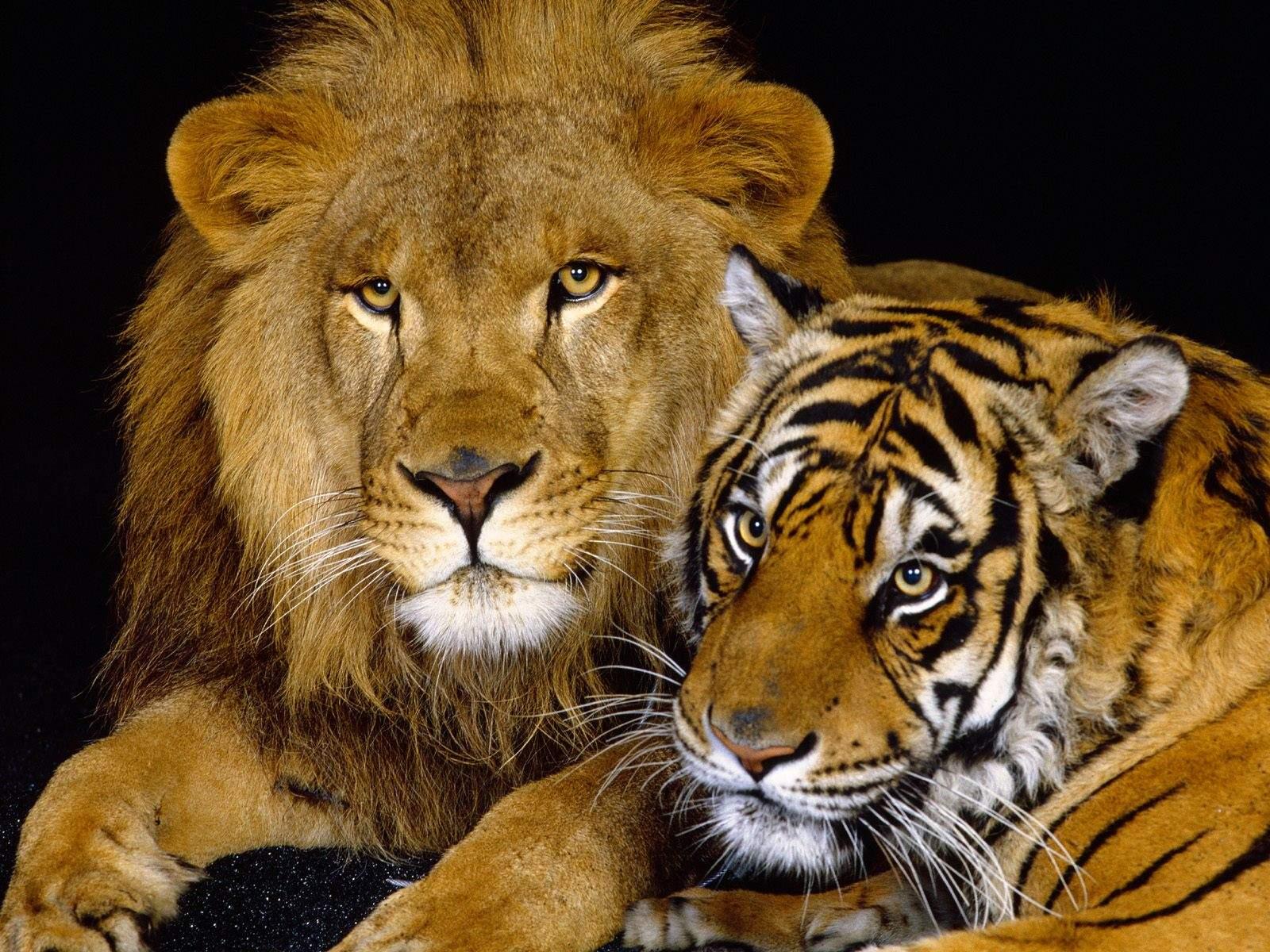 gambar hewan buas